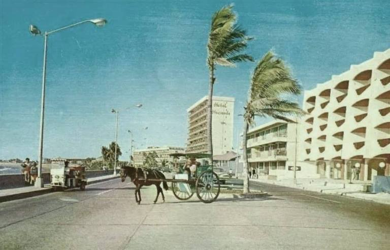 pulmonias and aranas 1960's mazatlan