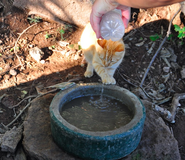 Bringing cats water and food on the hike mazatlan