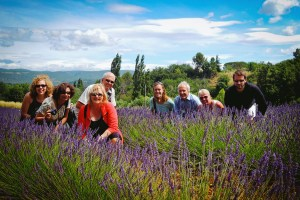 Provence Tour in lavender fields