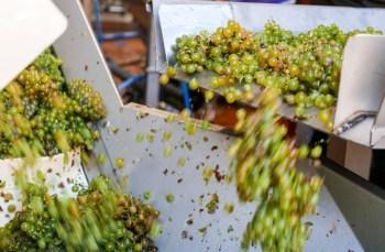 Bordeaux, Arcachon, Saint Emilion Wine & Foodie Cultural Tour Experience
