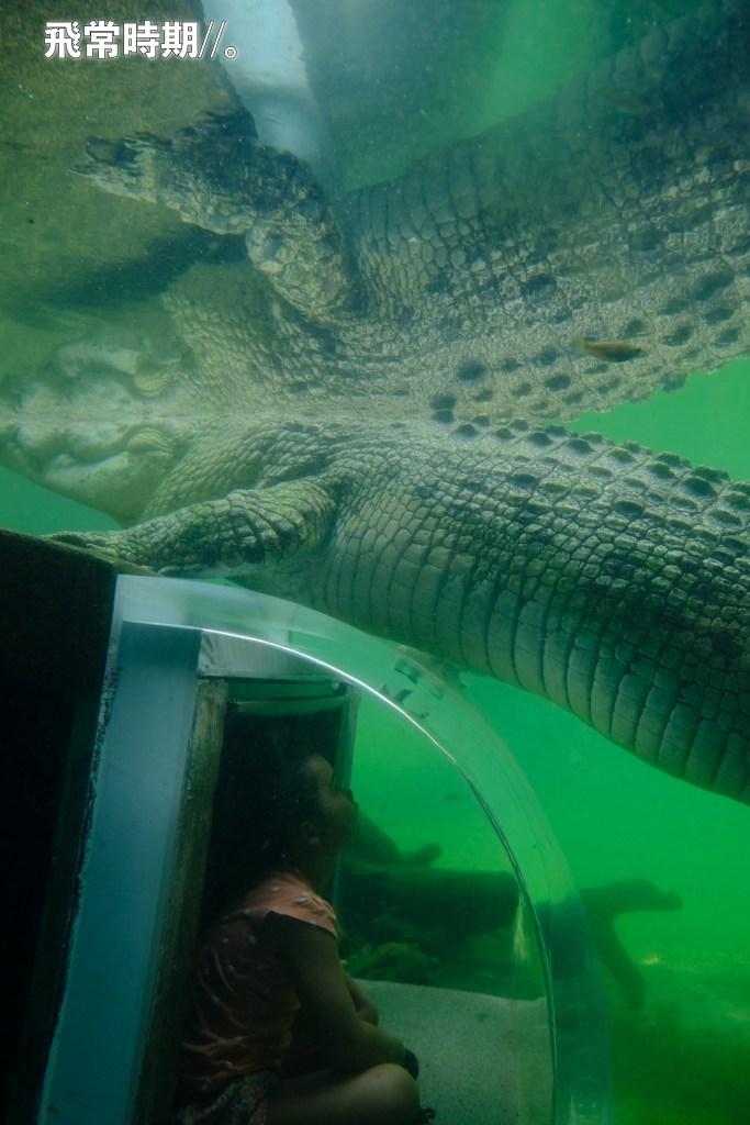 如此埋身看鱷魚,不是處處都可以。