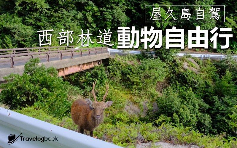 【日本】屋久島自駕 西部林道‧動物自由行