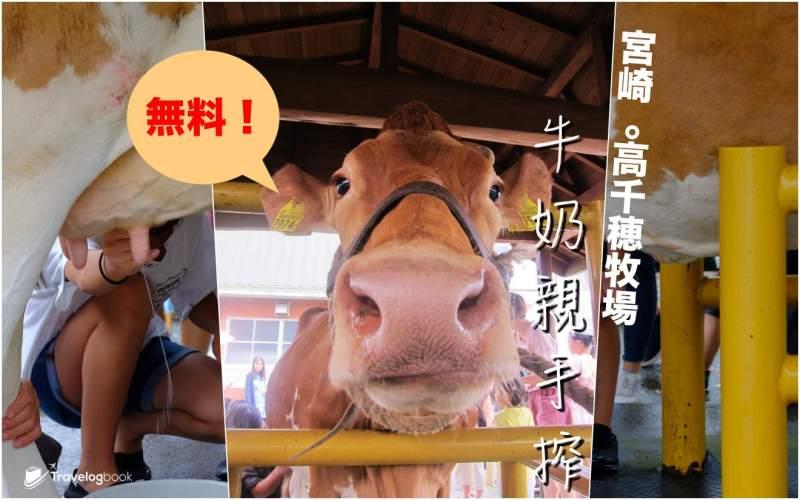 【九州】免費!宮崎.高千穗牧場  牛奶親手搾