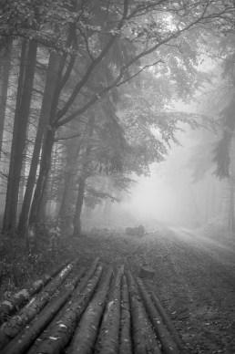 Linienführung: Fotografieren bei Nebel