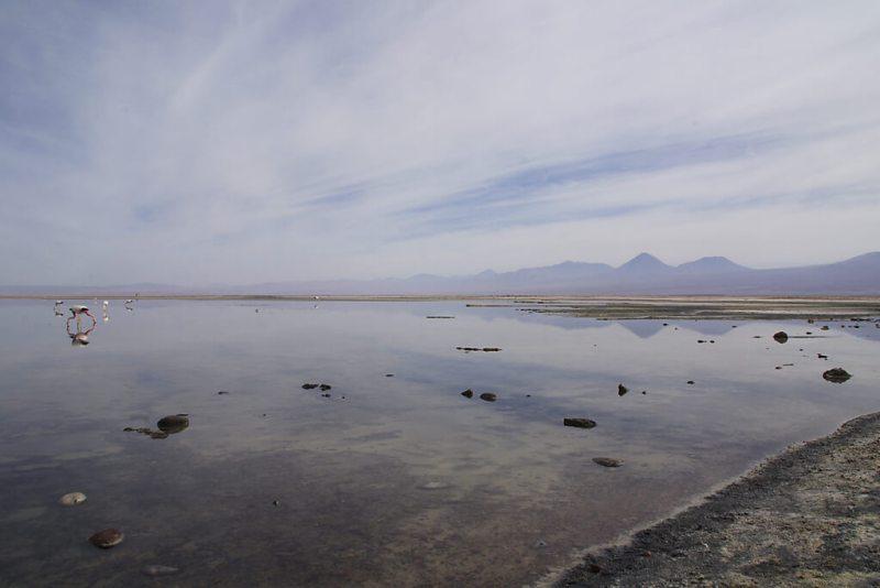 Laguna de Chaxa in der Atakama-Wüste