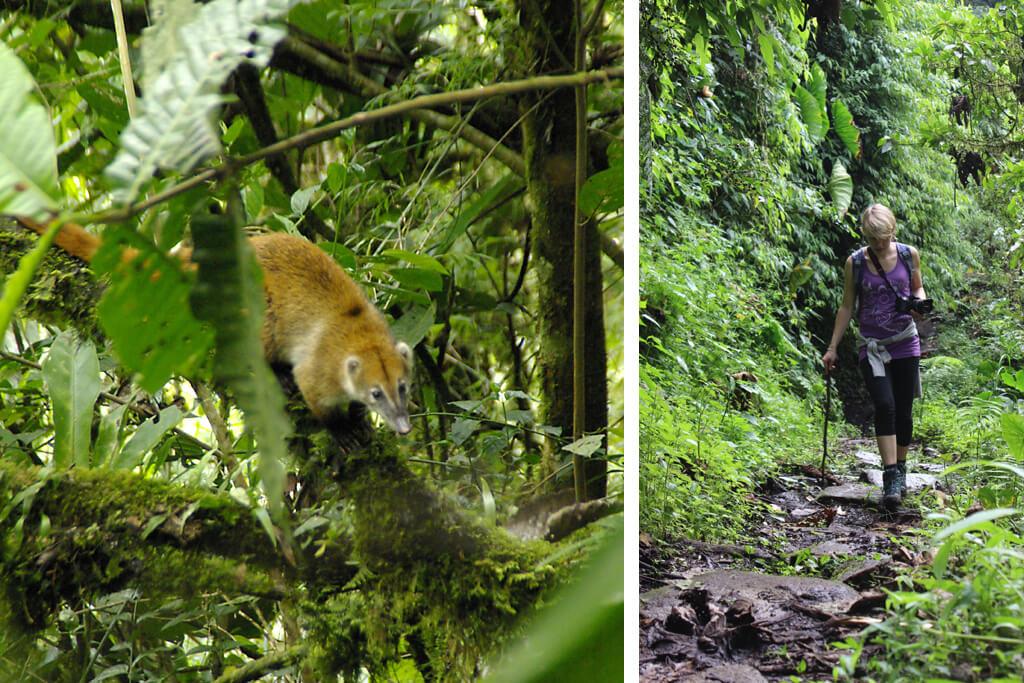 Wanderung durch den Wald bei Banos