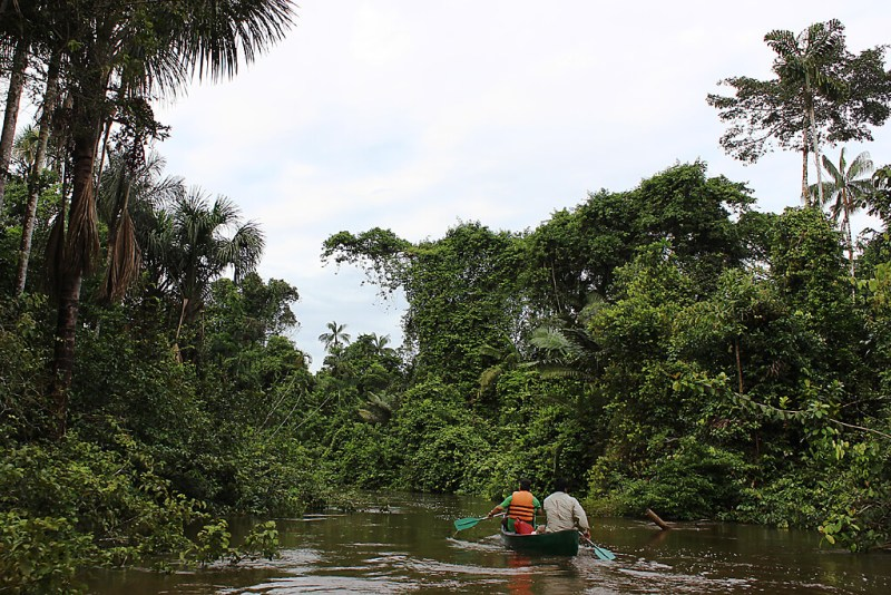 Amazonas Tour: Im Kanu durch Ecuadors Dschungel