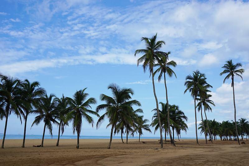 Palmenhain am Strand von Togo