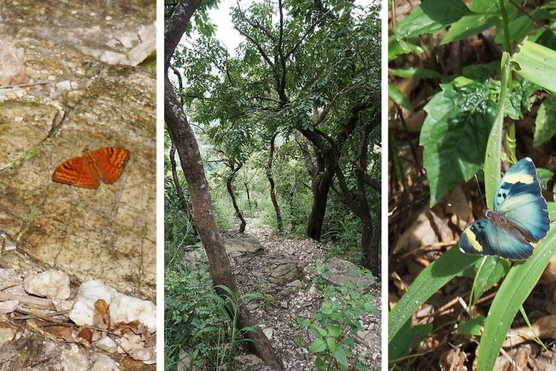 Schmetterlinge in Togo, Plateau von Danyi