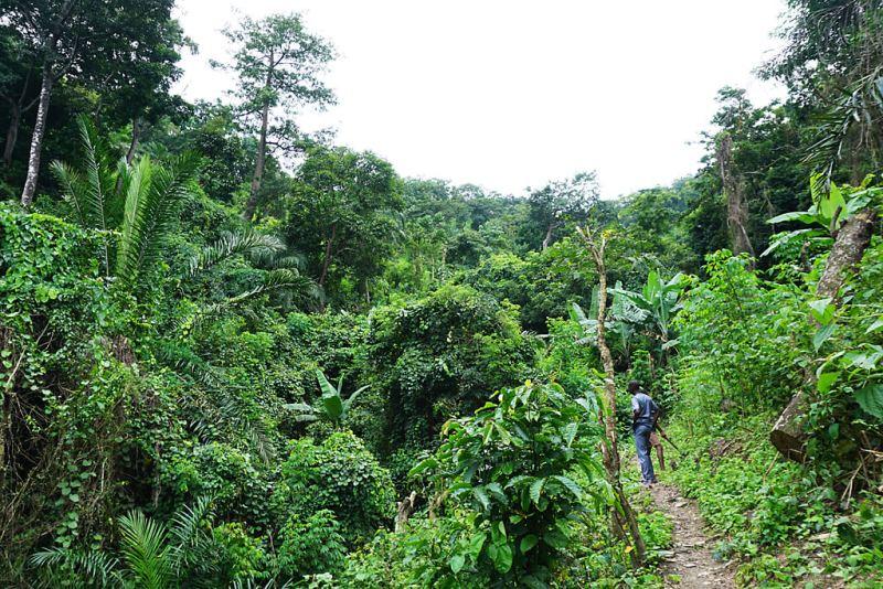 Wald bei Yikpa