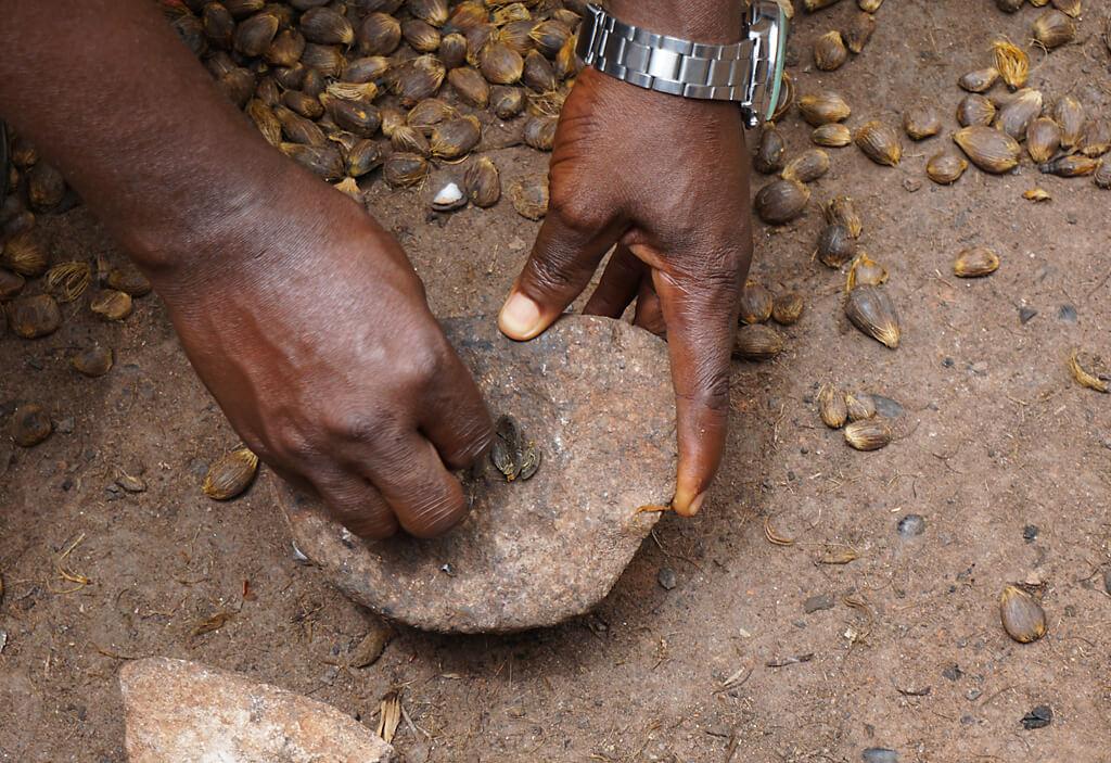 Palmnüsse der Ölpalme zur Herstellung von Öl
