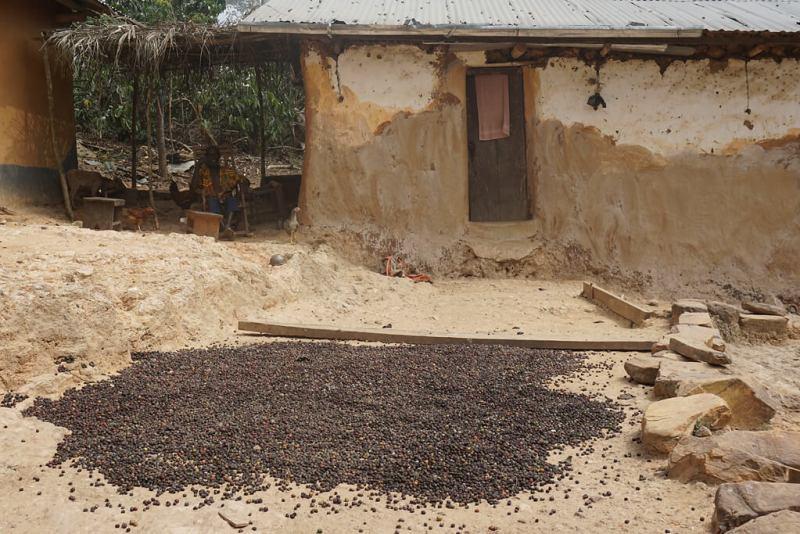 Kaffee auf einem Hof bei Kpimé