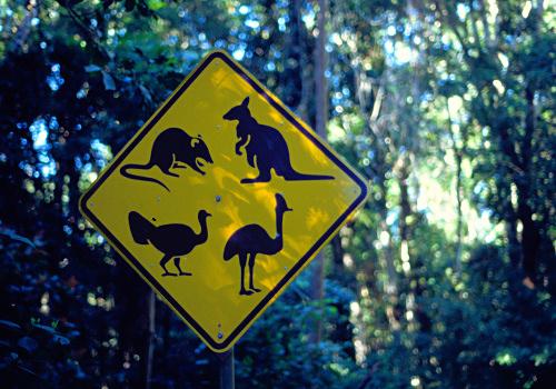 Koalas, Wombats, Kangaroos, oh my.