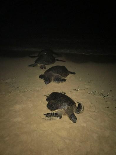 Turtles sleep at night