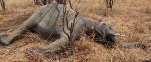 Olifantenjacht