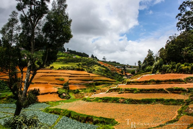 The picturesque meadows in Ooty, India