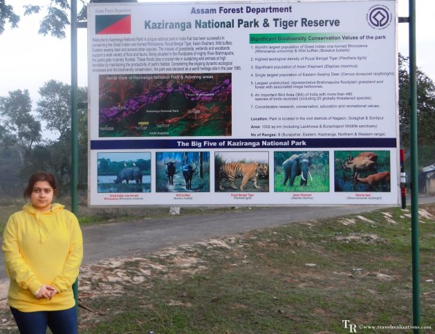 Travel Realizations, Kaziranga, elephant safari, forest safari, Indian forests safaris