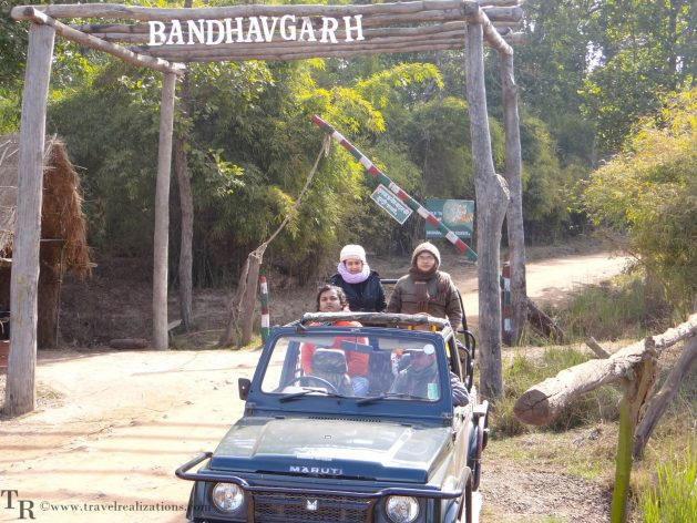 Travel realizations, forest, Bandhavgarh forest, India, India's top 4 forests to go for a wildlife Safari, Wildlife safari