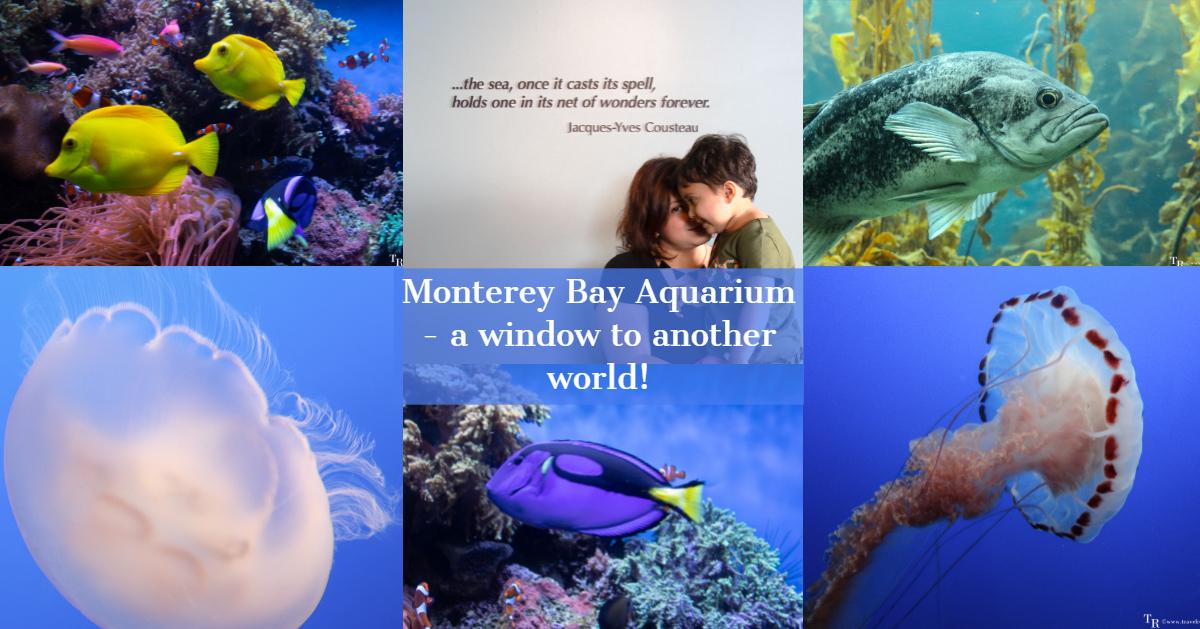 Monterey Bay Aquarium - A window to another world!