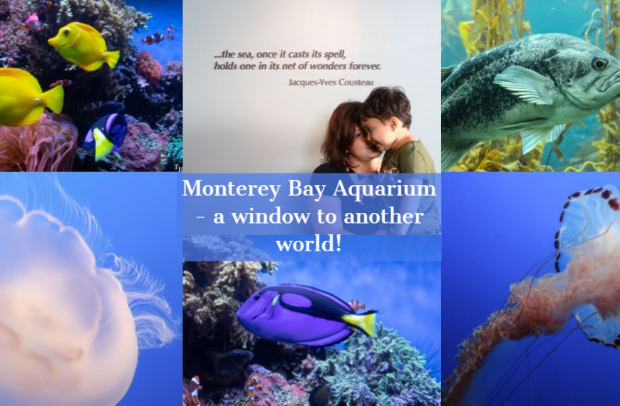 Monterey Bay Aquarium – A window to another world!