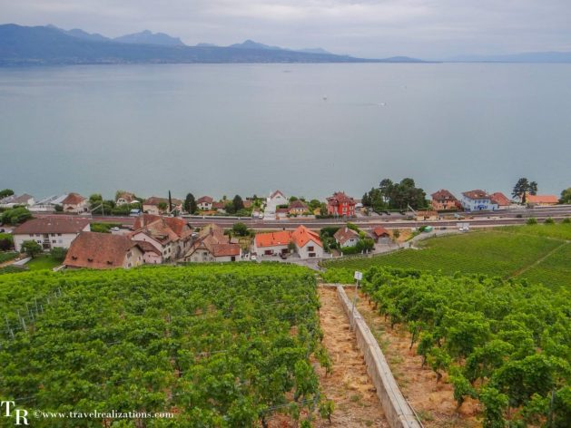 My Long Walks in Switzerland, Travel Realizations, Lake Geneva, Vineyard