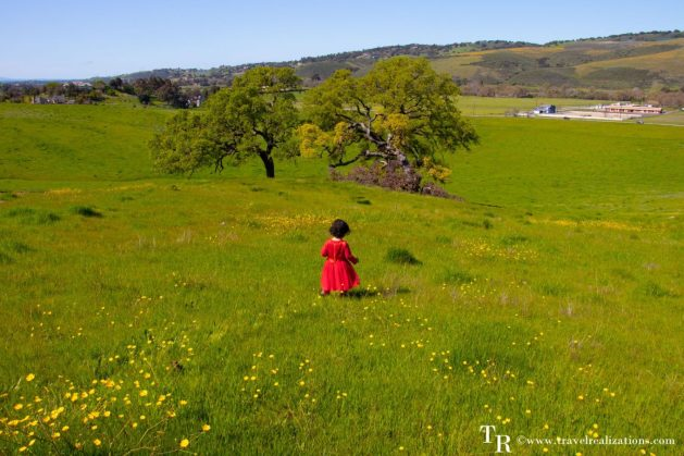 Welcoming spring with California wildflowers, Travel Realizations