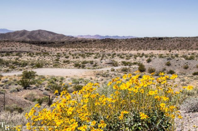 Las Vegas to Grand Canyon -journal of a journey, Travel Realizations, las vegas to grand canyon south rim, desert, wildflowers