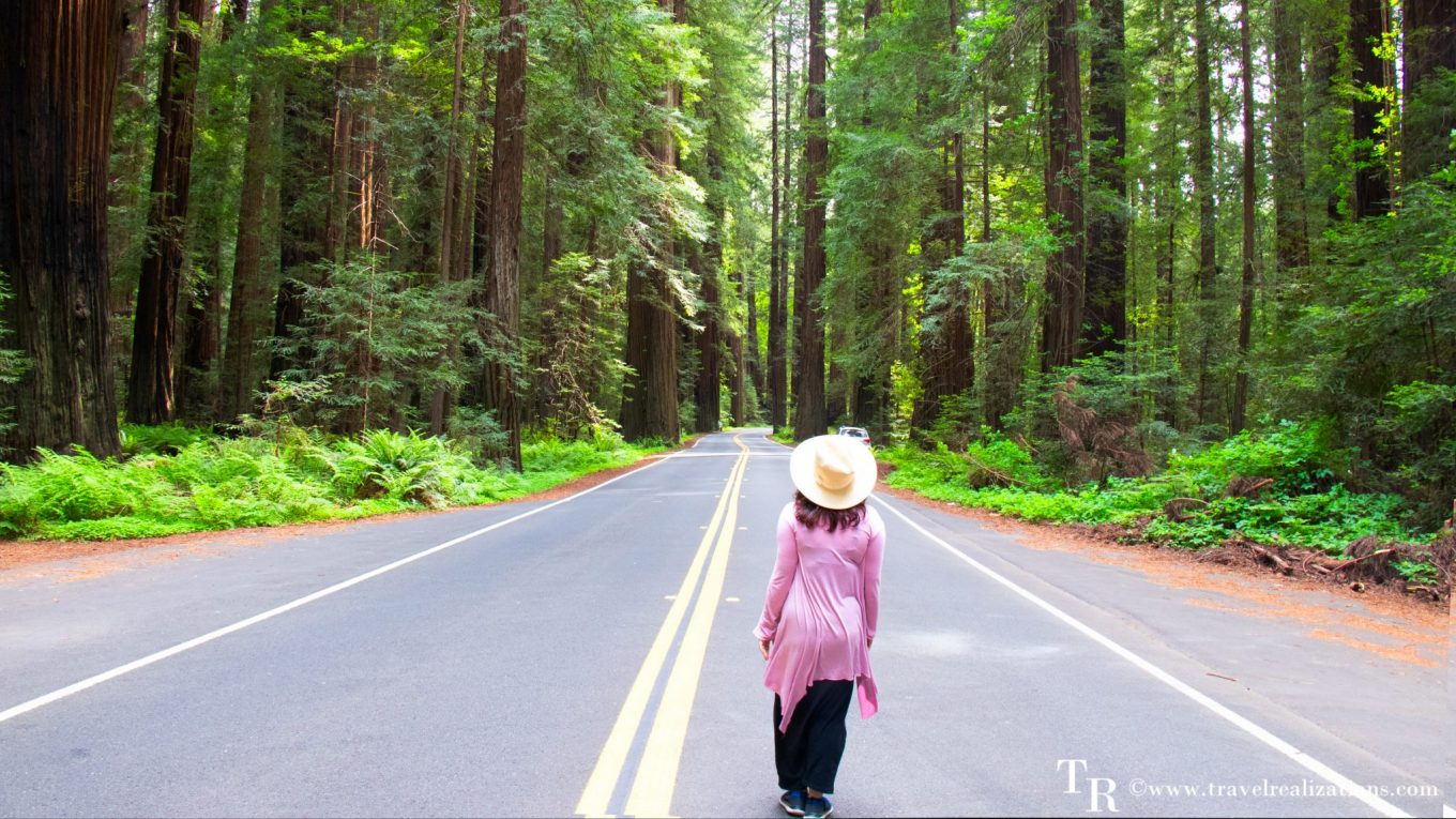 Rendezvous with Redwood trees in the Redwood National Park, California - The tallest trees on earth!