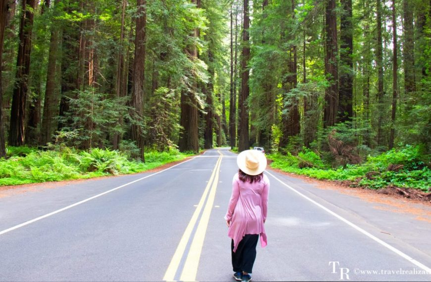 Rendezvous with Redwood trees in the Redwood National Park, California – The tallest trees on earth!