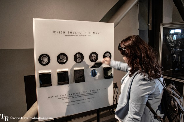Exploratorium in San Francisco - when the destination is science, Travel Realizations , Which embryo is human