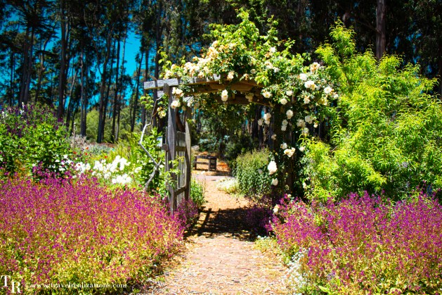 San Francisco Bay Area gardens to visit in Spring, Travel Realizations, Mendocino Coast Botanical Gardens