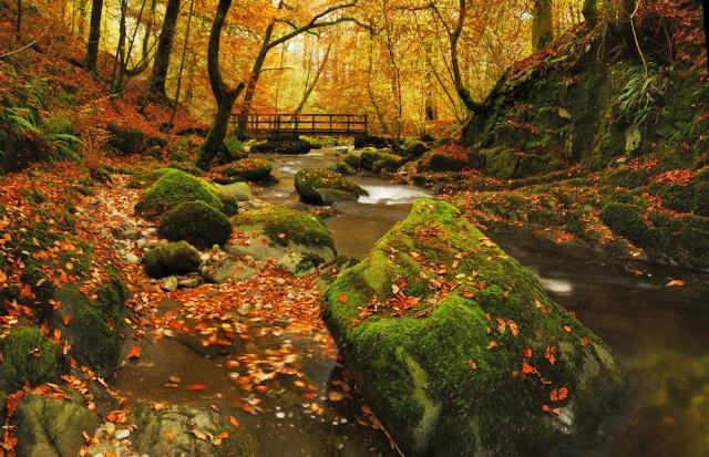 Lake district autumn