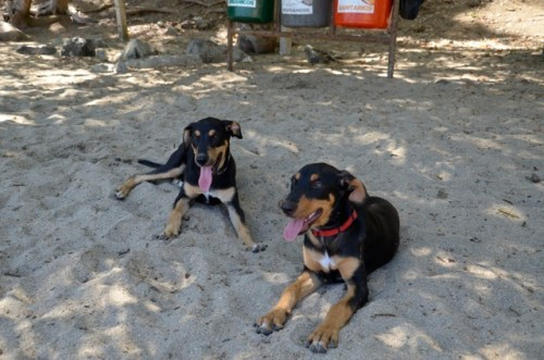 Diego and Frida reunite for a romp on the beach - May 11.