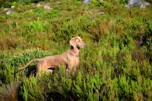 Daisy of the Trail House Betty's Bay South Africa