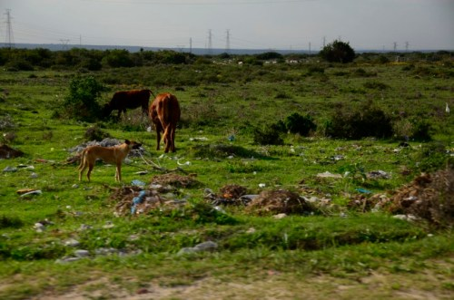 Motherwell South Africa litter
