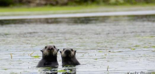 Shooting the Wildlife of Monterey Bay