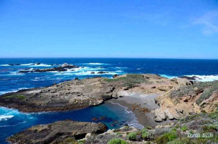 Sea lion_DSC2909_Point Lobos