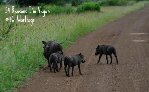 46_warthogs