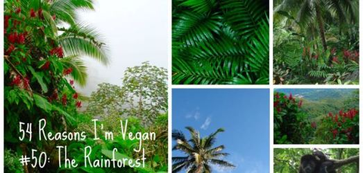 54 Reasons I'm Vegan: Rainforests, Air, Water, Soil, Climate Change, Peace & Hunger (50-54)