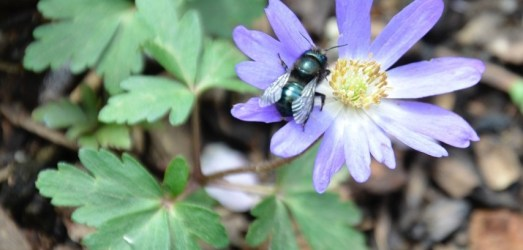 The Last Bee – A Poem for Earth Day
