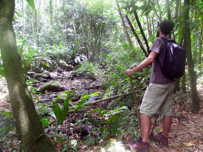 Hike to Seven Sisters Falls in Grenada grenada