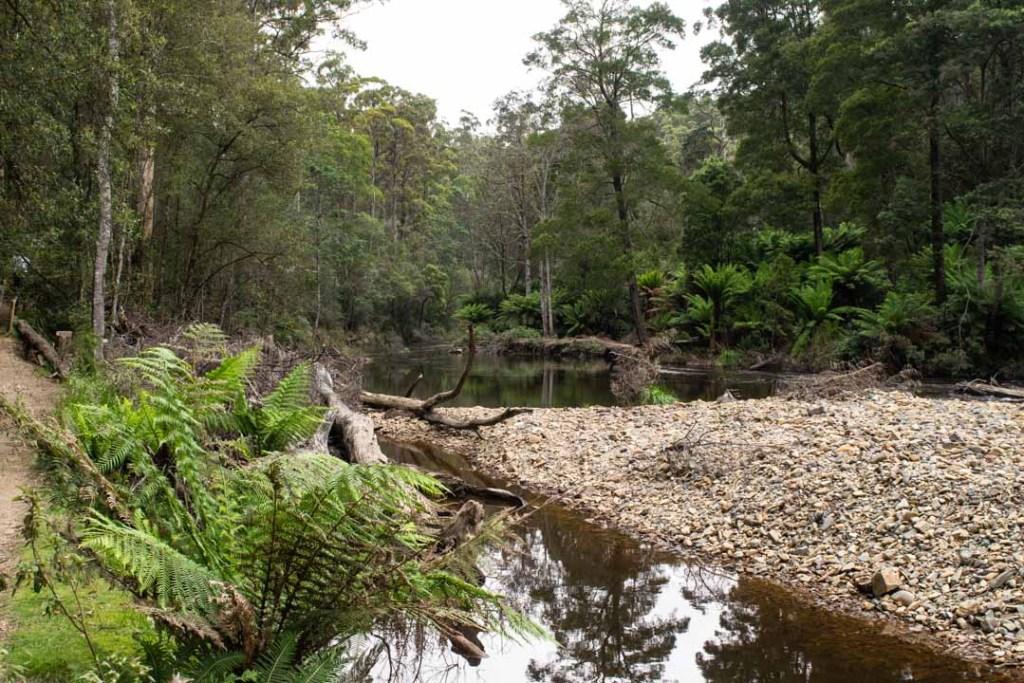 Fern Glade Nature Tasmania's North