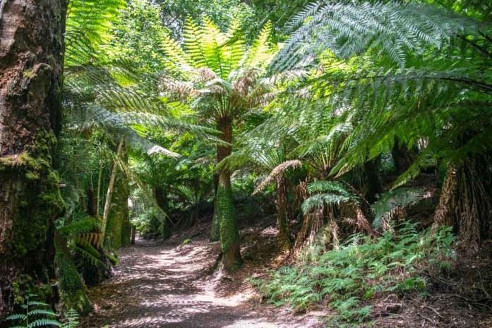 Tasmania Ferns