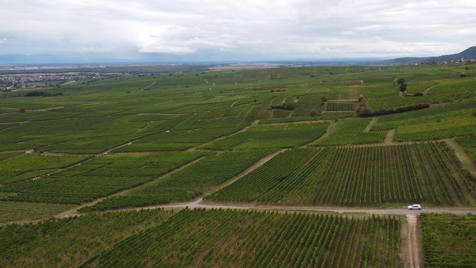 Elzas wijnvelden