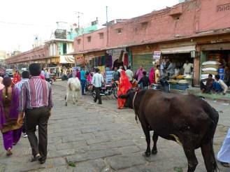 Heilige Kuh auf dem Sardar Market Jodhpur