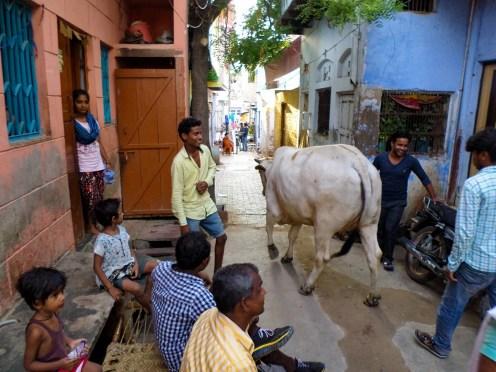 Kuh Straße Agra