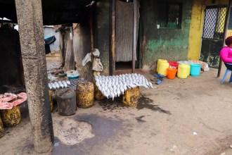 Fish Mathare Slum