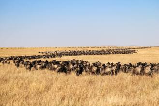 Great Migration Masai Mara