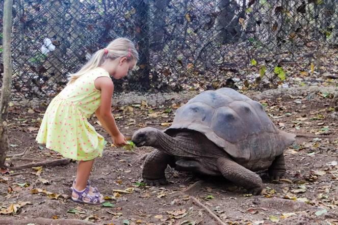 Riesenschildkröten Sansibar