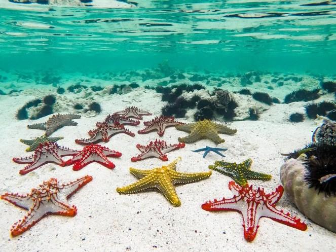 Seesterne Sansibar